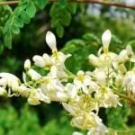 春だからもう悩むの卒業します!感情を理解してハッピーな世界を生きる。奇跡の植物マルンガイ説明会