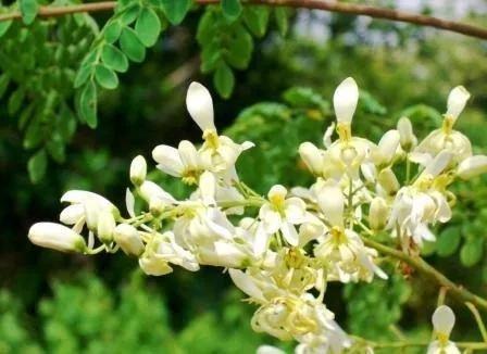 保護中: 春だからもう悩むの卒業します!感情を理解してハッピーな世界を生きる。奇跡の植物マルンガイ説明会