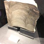 ちきゅうの雫の原材料となる海水に生きるストロマトライトの化石